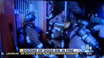 20 dogs killed in North Las Vegas house fire; 70 saved